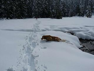 Snow is deep - a struggle for Gus