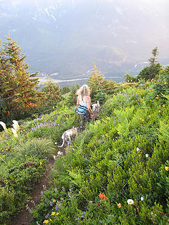 Lupine, Bear Grass, Daisy, Tiger Lilly, Paintbrush, Ferns, Whippets, & Babe - oh my!
