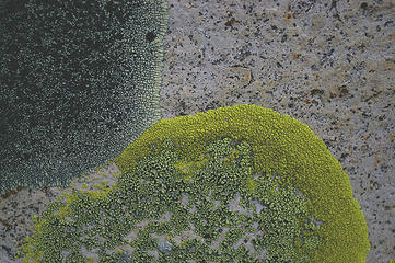 Swakane Cyn lichen on granite detail