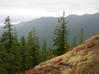 Approx 3250 ft/4 mi looking S across Duckabush River valley. Peakaboo view of Hood canal. Beautiful moss and wildflowers.
