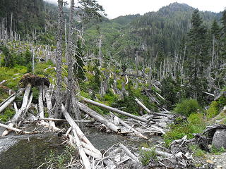 Blowdown event aftermath near Honeymoon Meadows camp