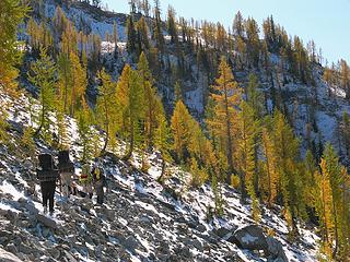 Hiking with larches 1