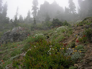 Cliffs and wildflowers 4700 ft/6.2mi