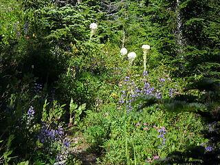 Wildflowers blooming along the trail