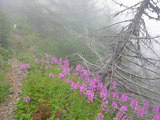 Slanted tree surrounded by Wildflowers in the fog at 4600ft/6.1 mi