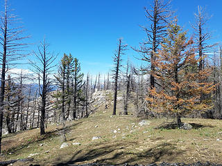 Burnt forest along Ruby Hill summit ridge
