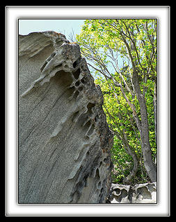 Roc N Tree, 5.9.08.