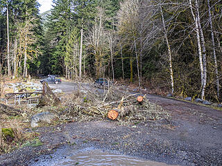 Downed trees from the storm just past the Taylor River bridge