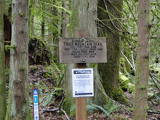 Taking the Tiger Mountain Trail (TMT) up to West Tiger 2.