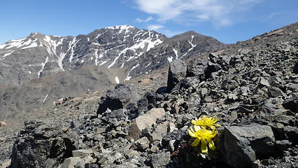 Beautiful flowers growing in the talus