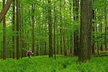 11- Amazing fern fields (selfie)