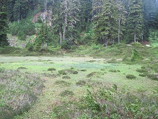 Meadows around lake