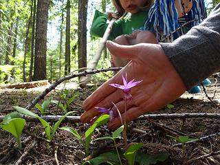 Fairy slipper orchid. There were many along the trail.