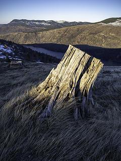 illuminated stump