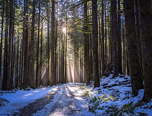 Sun rays in forest along Middle Fork road