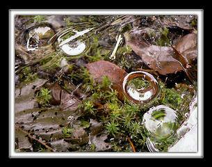 Ice Image 3, 1.24.08.