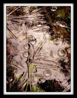 Ice Image 6, 1.24.08.