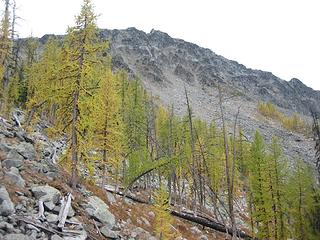 larches below Tiffany