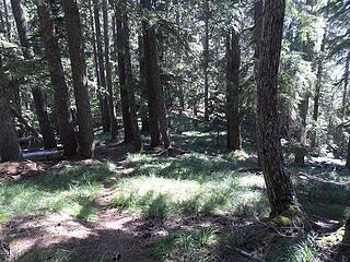 beargrass everywhere!