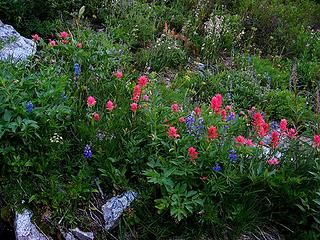 Paintbrush & lupine near the creek bed