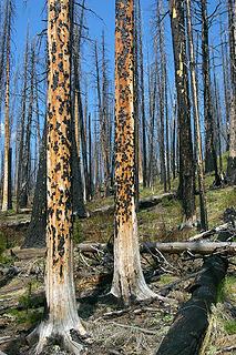 Driveway Butte Needles fire1