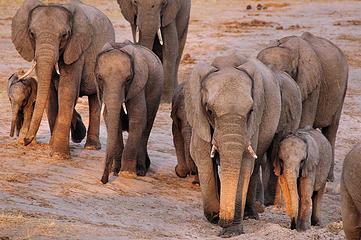 Elephant, Hwange National Park, Zimbabwe