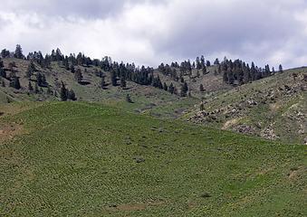 NE shoulder of Horse Lake Mountain