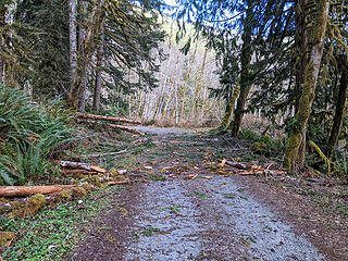 Messy alder fall just before the reroute