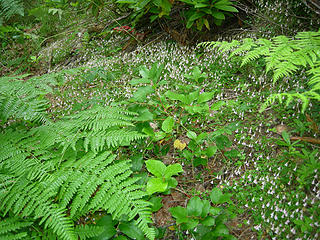 Wildflowers and ferns at 3400 ft/4.25 mi