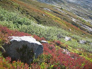 fall colors in Horseshoe basin
