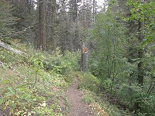 Lower Miller Peak trail.