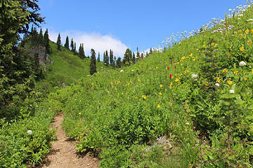 Trail is being crowded out by the flowers