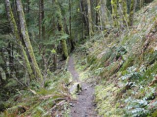 Tiger Mountain trail.