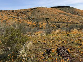 Peridot Mesa - Arizona