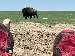 Bison!, Badlands Nat'l Park, South Dakota