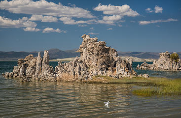 Mono Lake Tufa and gull