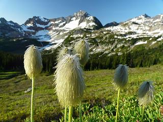 Anemone near cloudy pass
