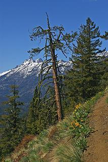 Driveway Butte trail2