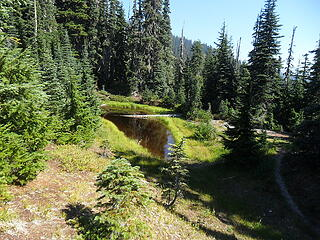 The tannic tarn, make a left and pass by this on your way down to the Elwha