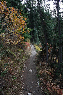 PCT with fall color