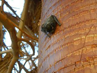 bat on a palm near the springs