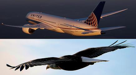 787 and Eagle