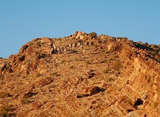 14 sheep