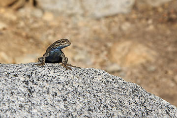 Lizard, Paradise Valley, Rae Lakes Loop, Kings Canyon National Park
