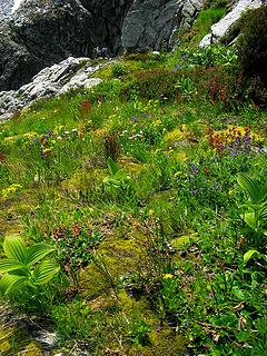 Brilliant green flower garden as the ledge bends into the gully