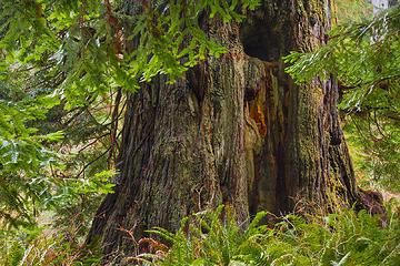 "Prairie Creek Redwoods State Park, California Portfolio: <a href=""http://www.lucascometto.com"" target=""_blank"">www.lucascometto.com</a>"