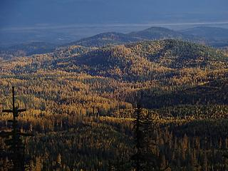 Tamaracks. The Pend Oreille River in the background.