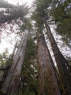 cedar grove trail 051419 01