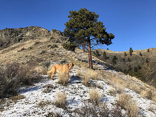 Mr. C on the ridge