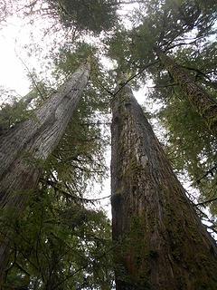 cedar grove trail 051419 02